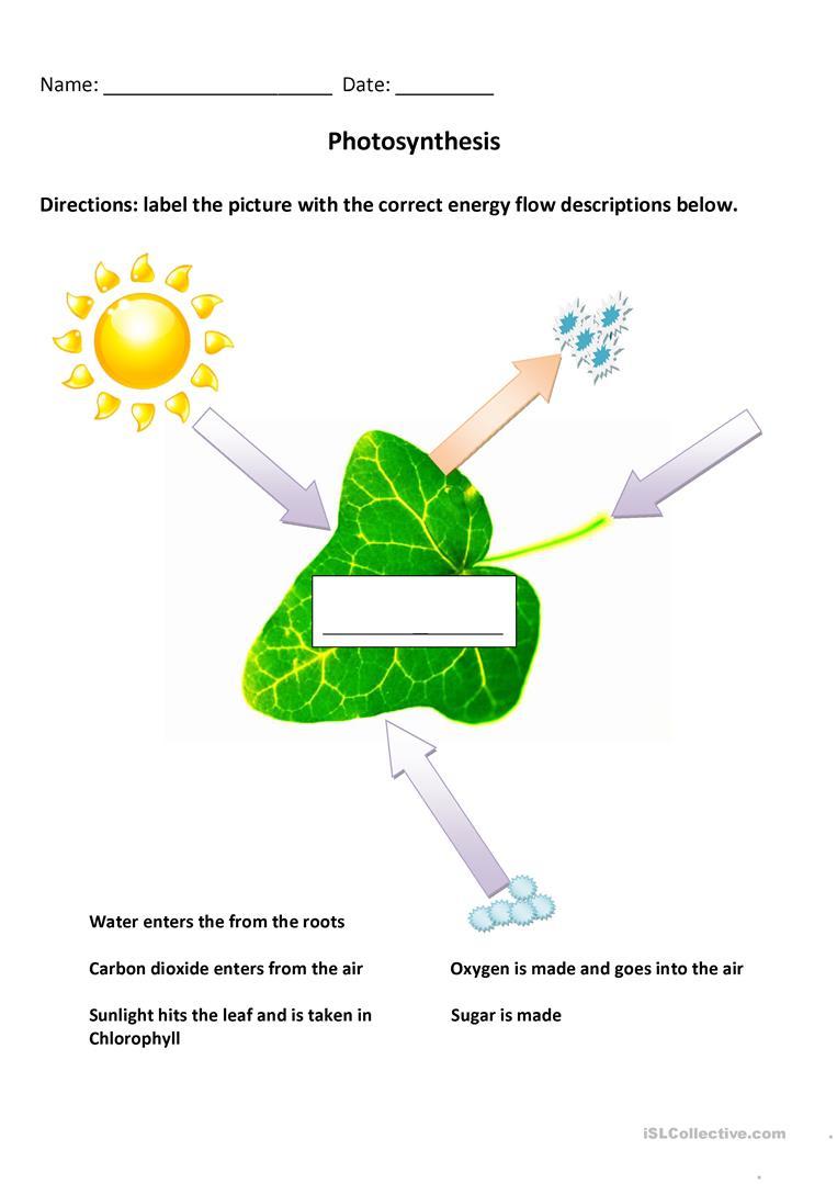 2 Free Esl Photosynthesis Worksheets | Free Printable Photosynthesis Worksheets