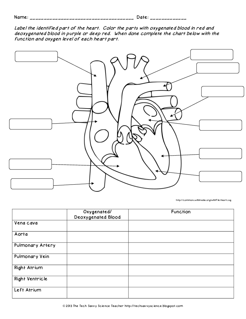 Anatomy Labeling Worksheets - Bing Images | Esthetics | Human Body | Anatomy And Physiology Printable Worksheets