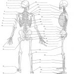Anatomy Labeling Worksheets   Google Search | I Heart Anatomy | Free Printable Human Anatomy Worksheets