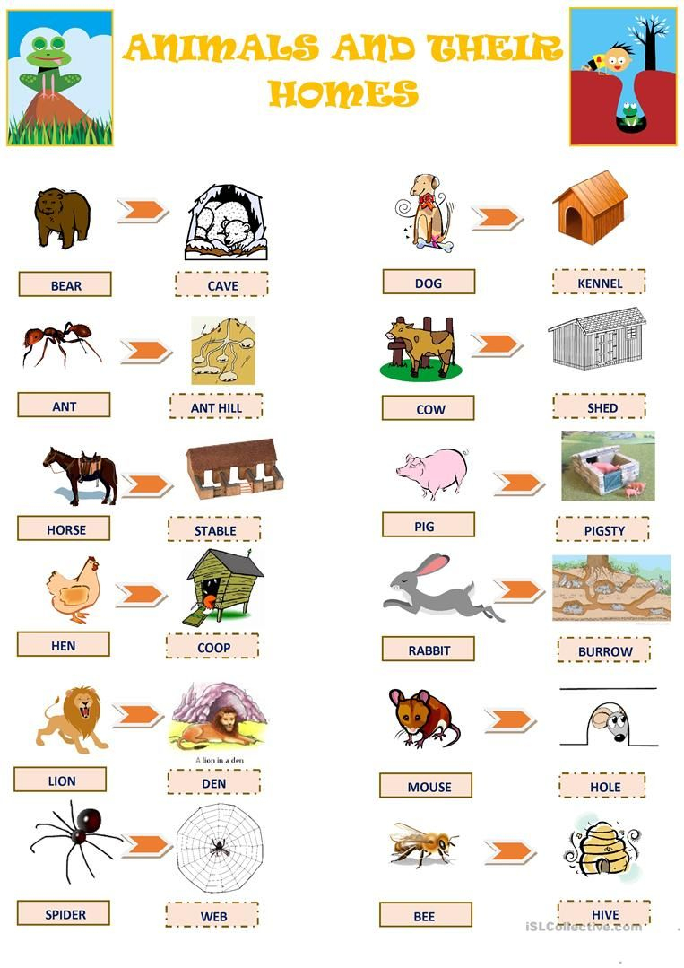 Animals And Their Homes Worksheet - Free Esl Printable Worksheets   Free Printable Worksheets Animal Adaptations