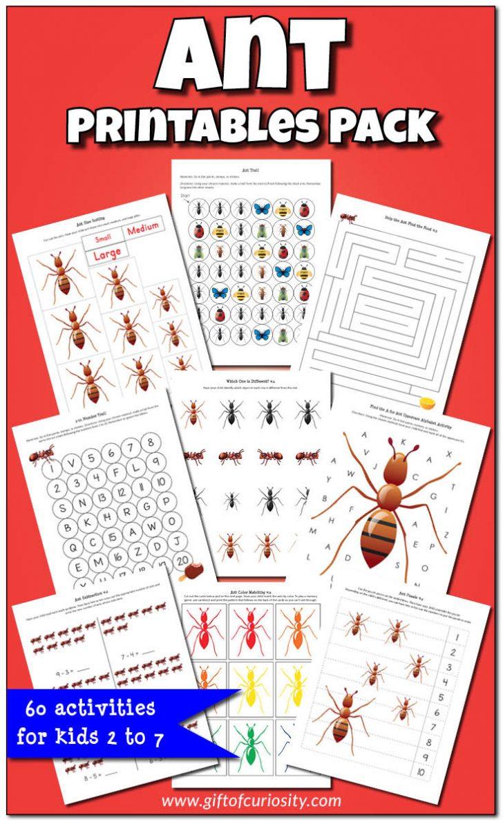 Ant Worksheets Printables