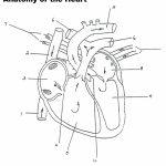 Blood Flow Through The Heart Diagrams | Diagram Link | Heart Diagram Printable Worksheet