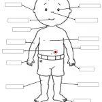 Body Parts | Edu. Activity Ideas | 1St Grade Worksheets, Teaching | Free Printable Worksheets Kindergarten Body Parts