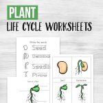 Free Printable Plant Life Cycle Worksheets   Money Saving Mom | Free Plant Life Cycle Worksheet Printables