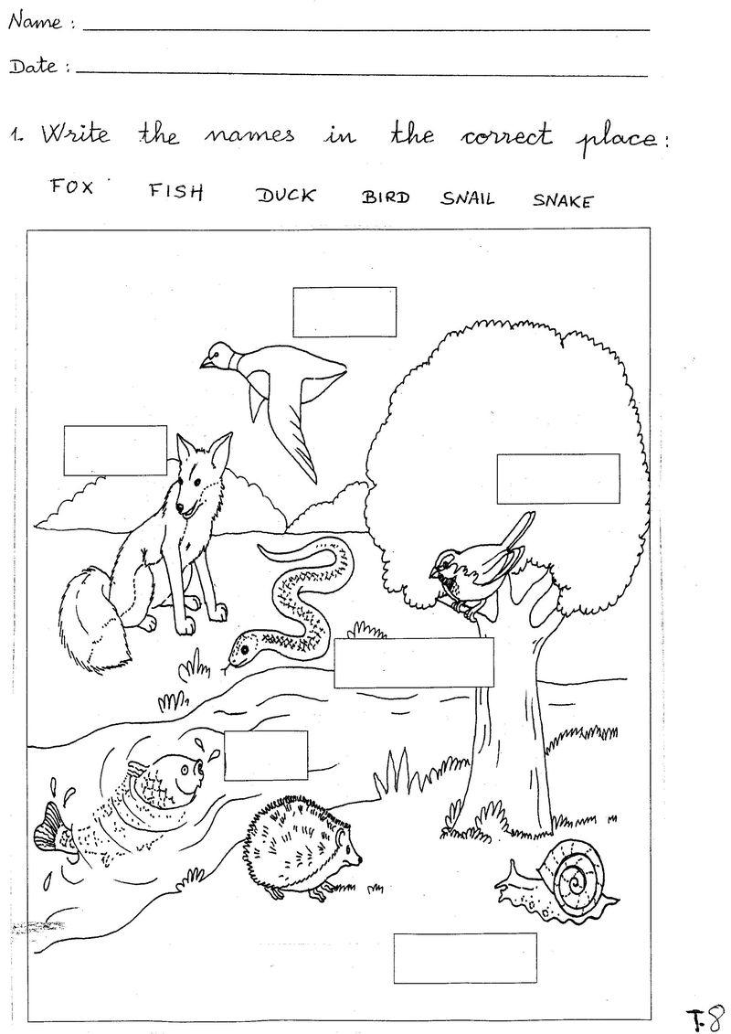 Free Science Worksheets Animal - Printable Worksheet | Printable Science Worksheets