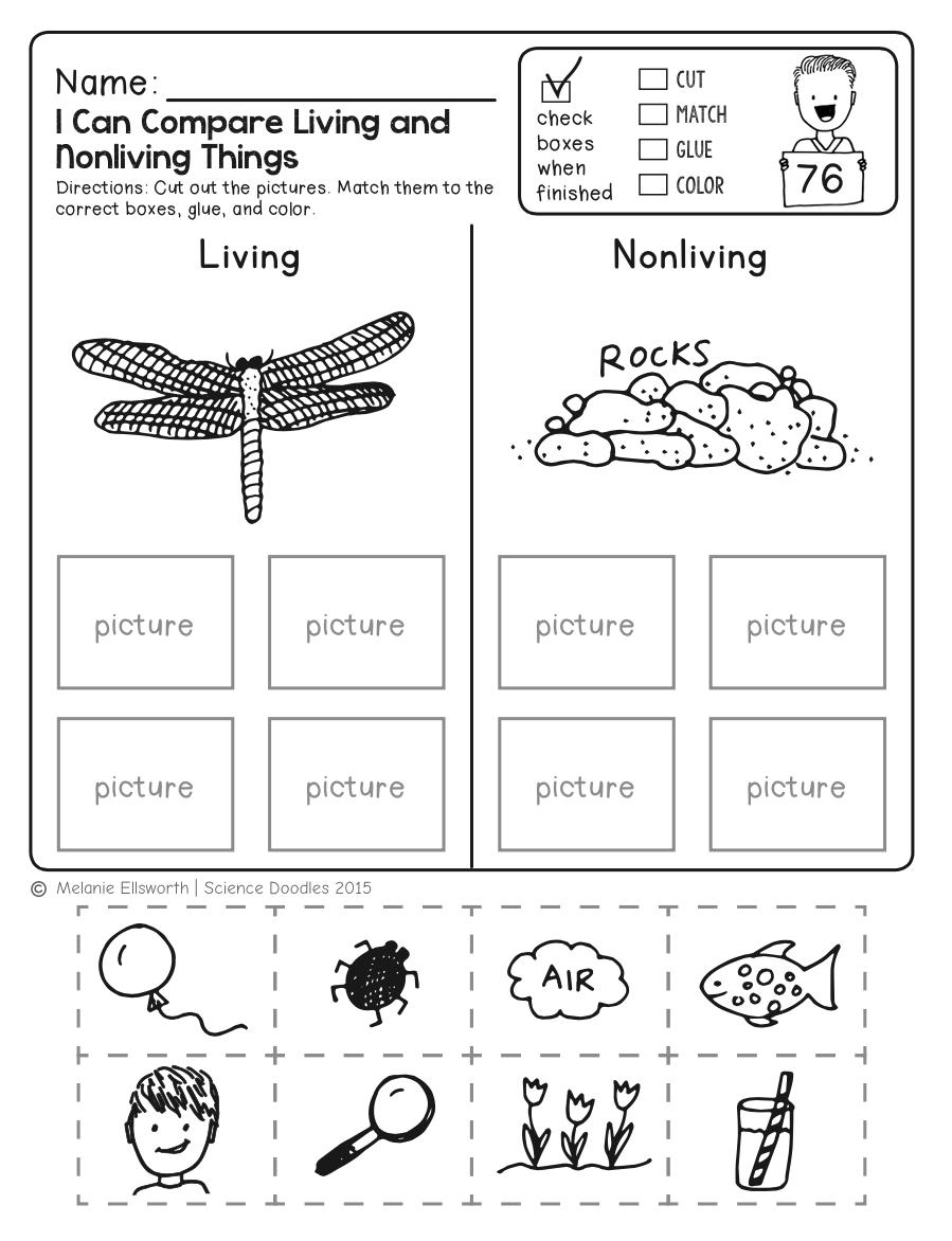 Freebie! No-Prep Kindergarten Science Doodle Printables | T E A C H | Printable Science Worksheets