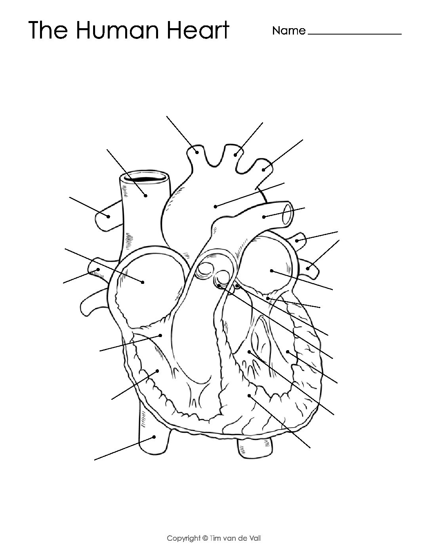 Health Archives - Tim's Printables | Heart Diagram Printable Worksheet