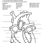 Heart Diagram To Label Printable   Koran.sticken.co | Heart Diagram Printable Worksheet
