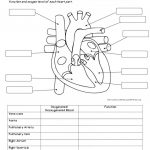 Human Anatomy Labeling Worksheets Human Body System Labeling   Free | Free Printable Human Anatomy Worksheets