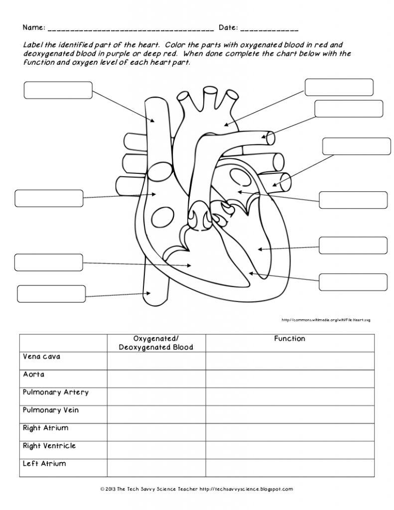 Human Anatomy Labeling Worksheets Human Body System Labeling - Free | Free Printable Human Anatomy Worksheets