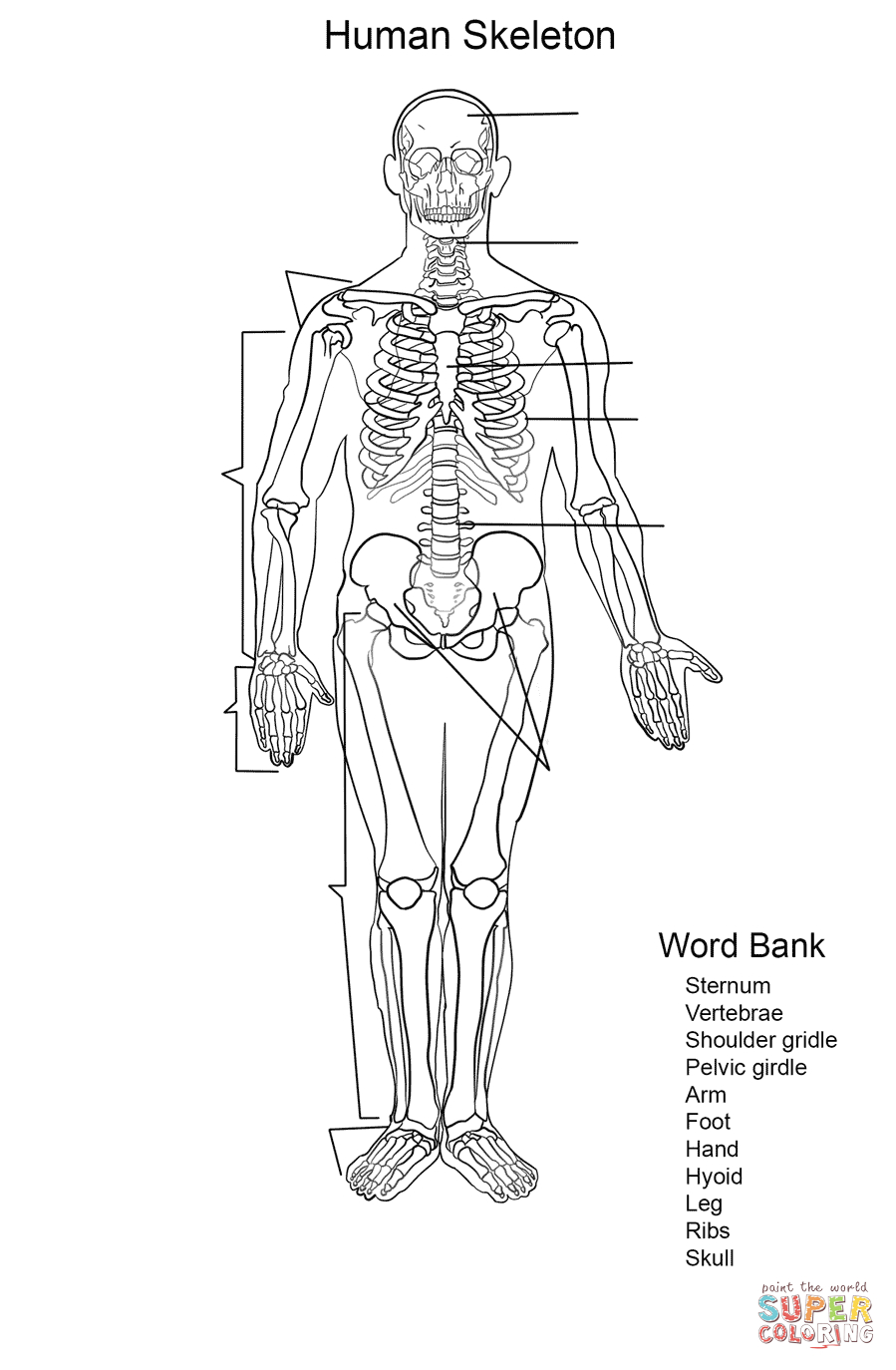 Human Skeleton Worksheet Coloring Page | Free Printable Coloring Pages | Human Skeleton Printable Worksheet