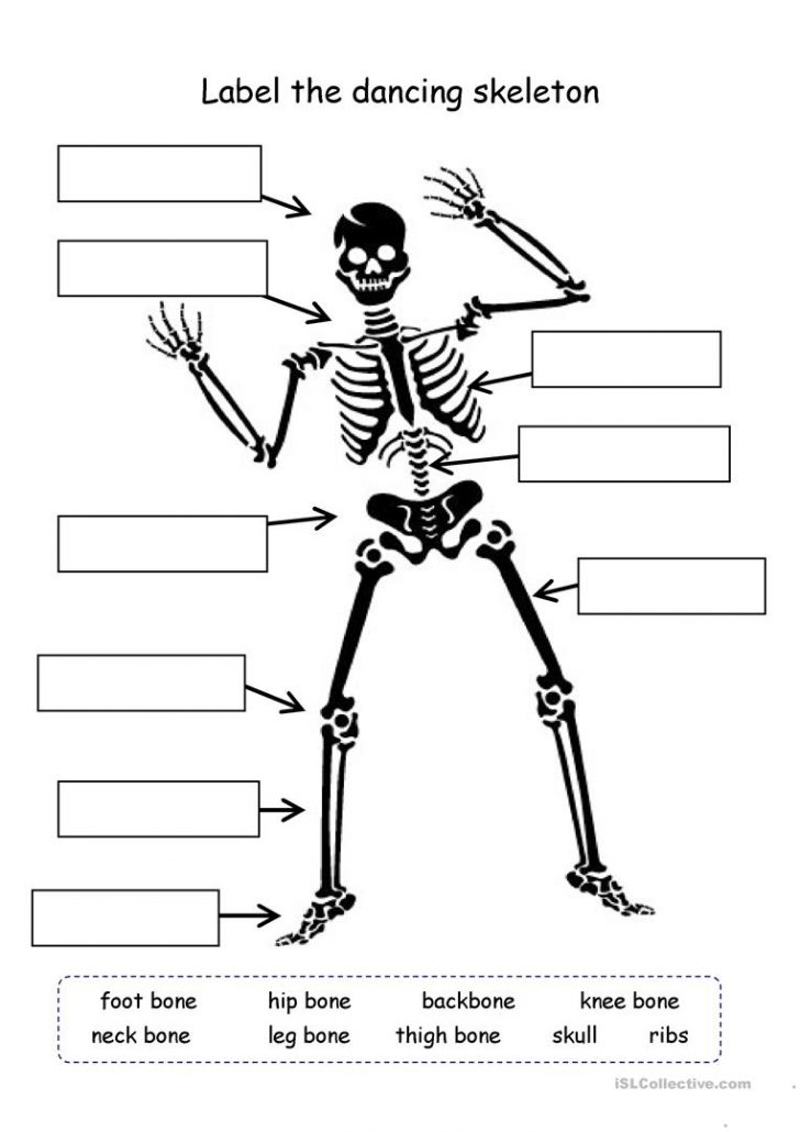 Human Skeleton Printable Worksheet