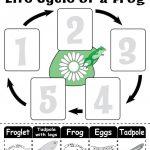 "Life Cycle Of A Frog"" Free Printable Worksheet | Amphibians | Frog | Life Cycle Of A Frog Free Printable Worksheets"