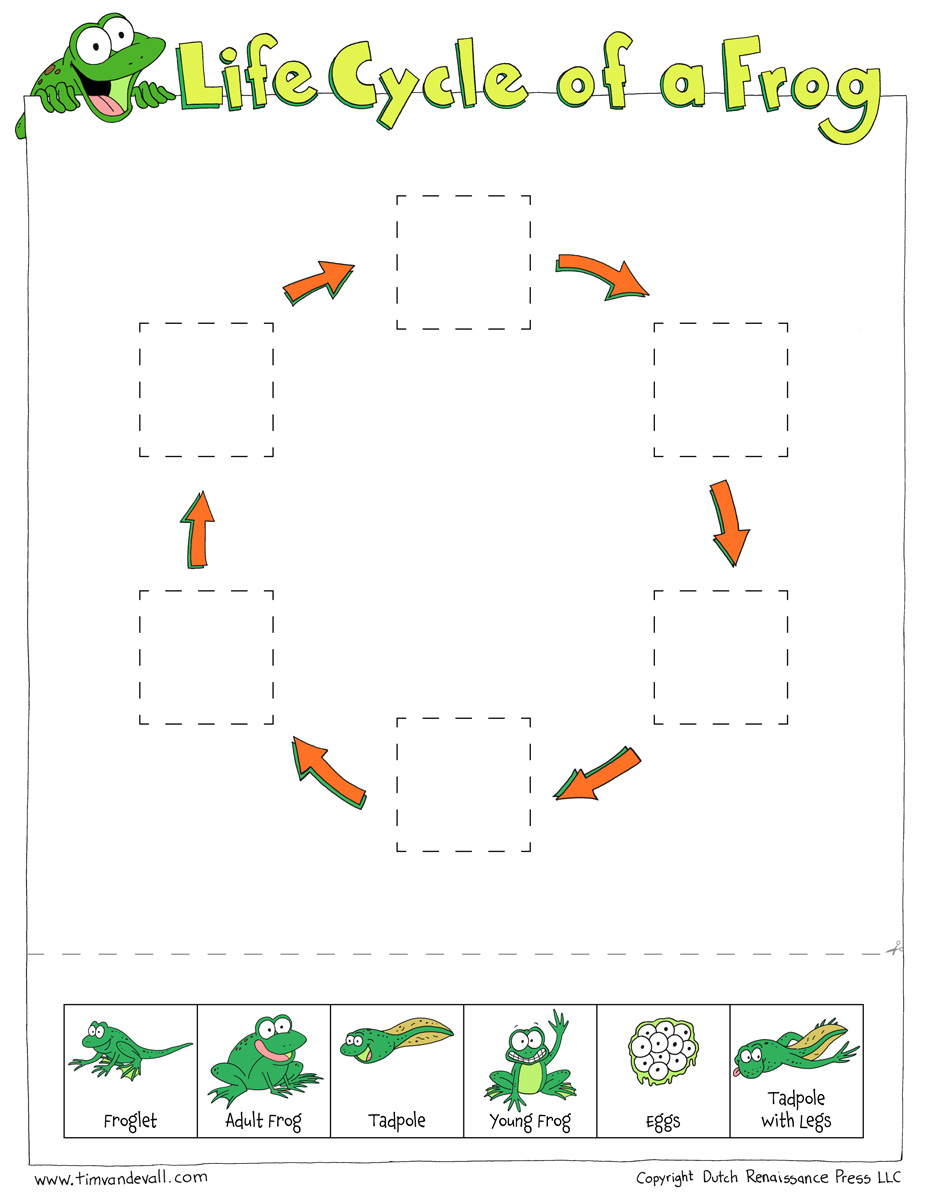 Life Cycle Of A Frog Worksheets - Cut And Paste | Life Cycle Of A Frog Free Printable Worksheets
