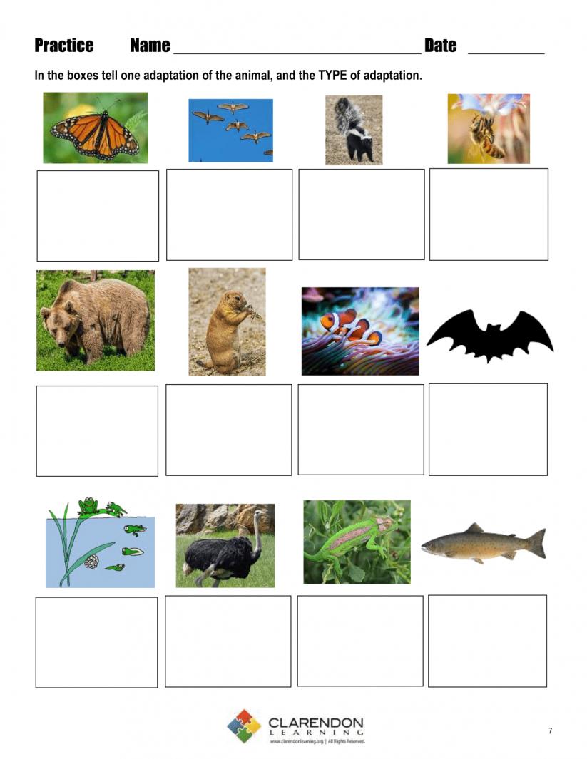 Math : Quotes Life Science Adaptations Quotesgram 1803909774   Free Printable Worksheets Animal Adaptations