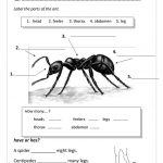 Pinalleyce Pang On Science | Ants, Ant Insect, Insects | Ant Worksheets Printables