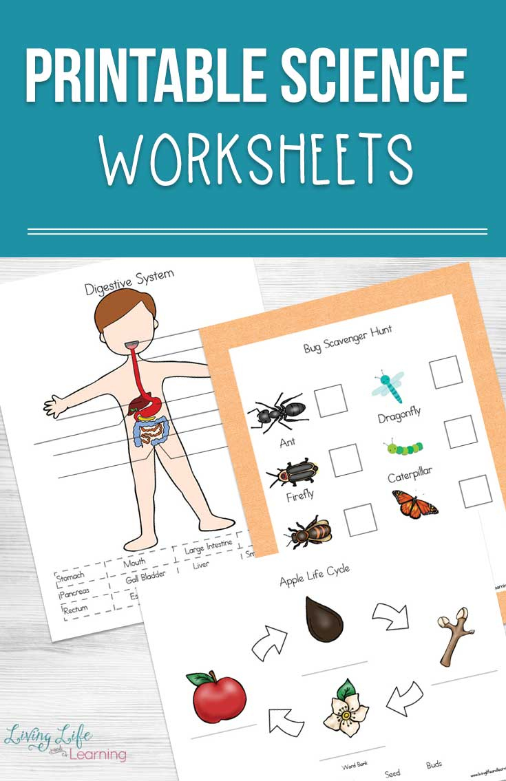 Printable Science Worksheets For Kids | Printable Science Worksheets