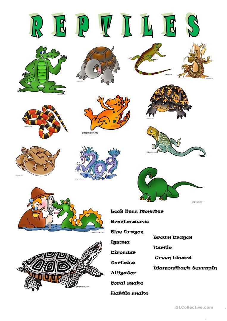 Reptiles Worksheet - Free Esl Printable Worksheets Madeteachers | Free Printable Reptile Worksheets