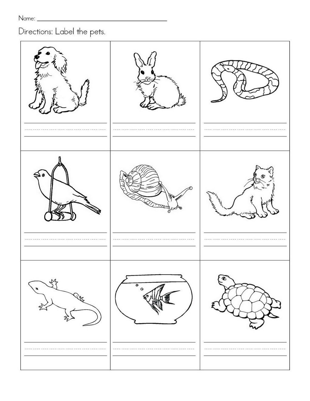 Stempelkaart | Pets Preschool Theme | Kindergarten Worksheets | Free Printable Pet Worksheets