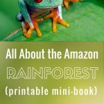 The Amazon Rainforest For Kids With Free Printable Mini Book | Rainforest Printable Worksheets