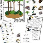 The Best Rainforest Printable Activities For Kids   Natural Beach Living | Rainforest Printable Worksheets