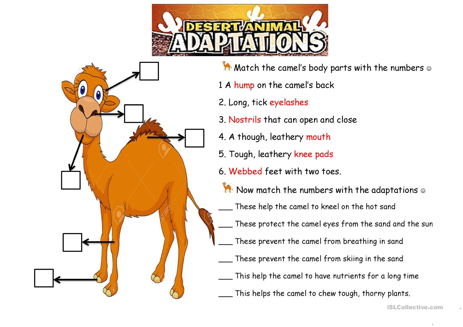 The Camel. Animals Adaptations Worksheet - Free Esl Printable | Free Printable Worksheets Animal Adaptations