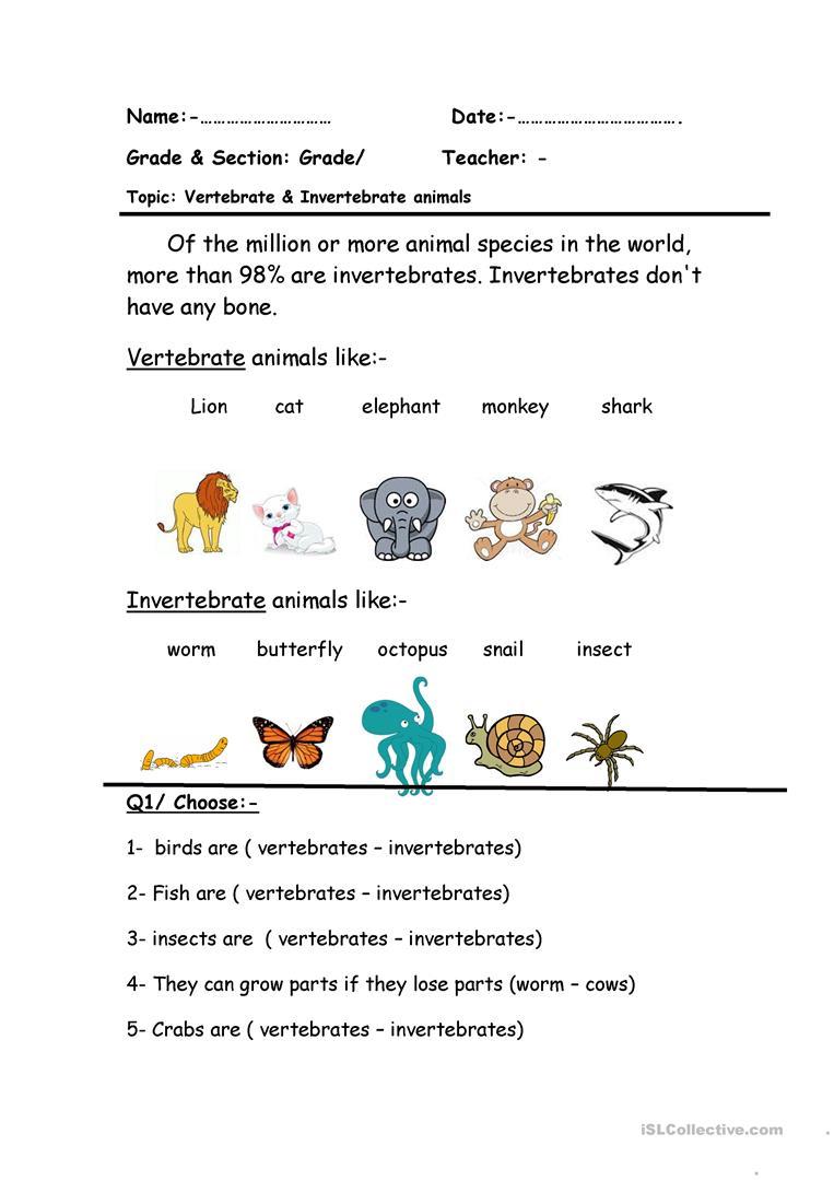 Vertebrate & Invertebrate Worksheet - Free Esl Printable Worksheets | Free Printable Worksheets On Vertebrates And Invertebrates