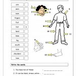 Vocabulary Matching Worksheet   Body Parts (1) Worksheet   Free Esl | Free Printable Worksheets Preschool Body Parts