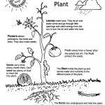 Worksheet : Life Cycle Flowering Plant Booklet Math Worksheets For | Free Plant Life Cycle Worksheet Printables