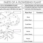 Year 3 Science: Parts Of A Plant Worksheetbeckystoke | Teaching | Free Plant Life Cycle Worksheet Printables