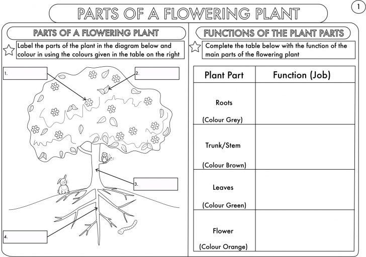 Science Worksheets Ks2 Printable