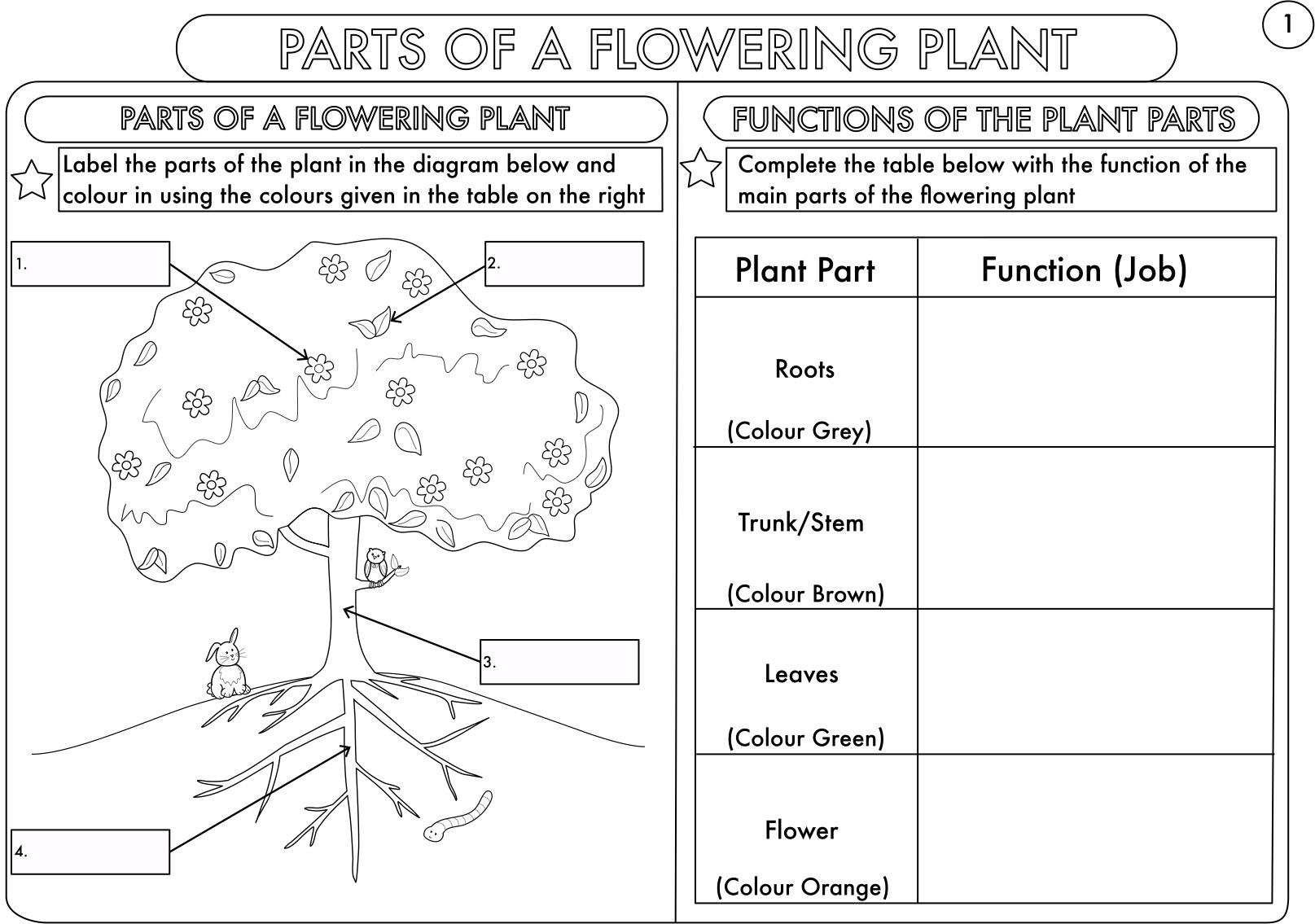Science homework help in EYFS, KS1 & KS2 Super Brainy Beans