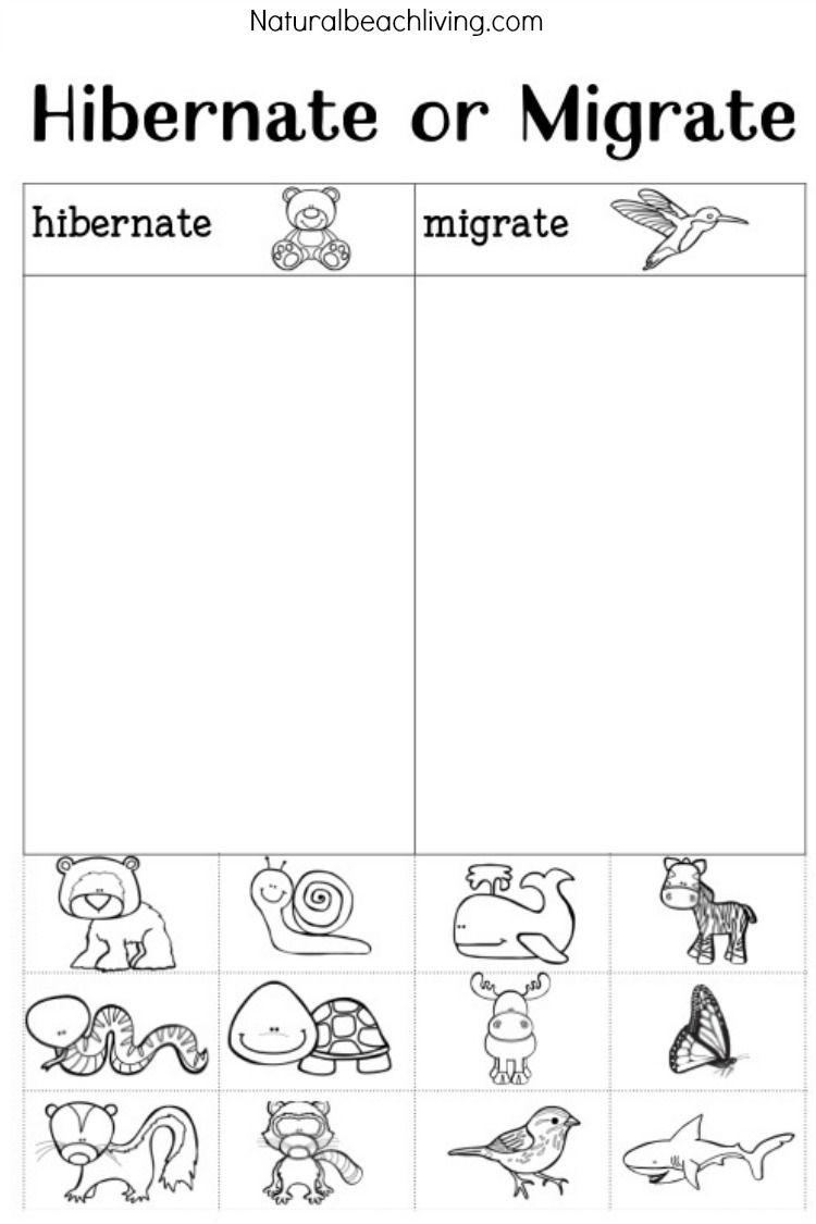 You'll Love These Winter Animals For Preschool Ideas | Montessori | Free Printable Hibernation Worksheets